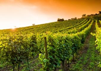 groupement-foncier-viticole